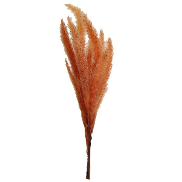 گل خشک طبیعی